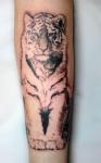tigretillo.png