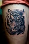 tigre-celia.png